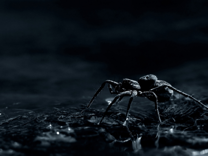 5 common animal phobias you can suffer from