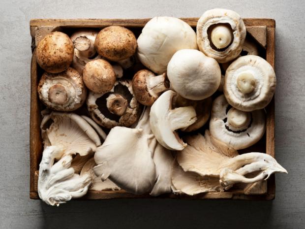 mycophobia or fear of mushrooms