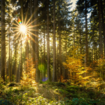 the meaning of dreaming of a forest